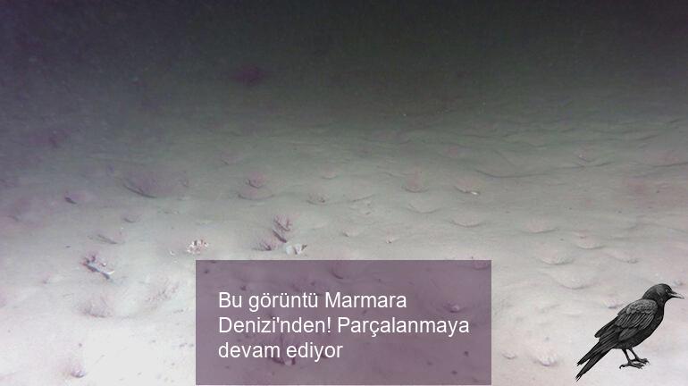 Bu görüntü Marmara Denizi'nden! Parçalanmaya devam ediyor