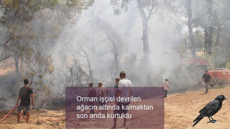 Orman işçisi devrilen ağacın altında kalmaktan son anda kurtuldu
